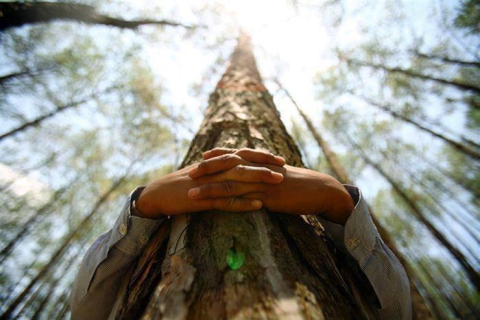 dia medio ambiente propuestas alternativas #UNGESTOPARAELPLANETA los 365 días del año%disenosocial