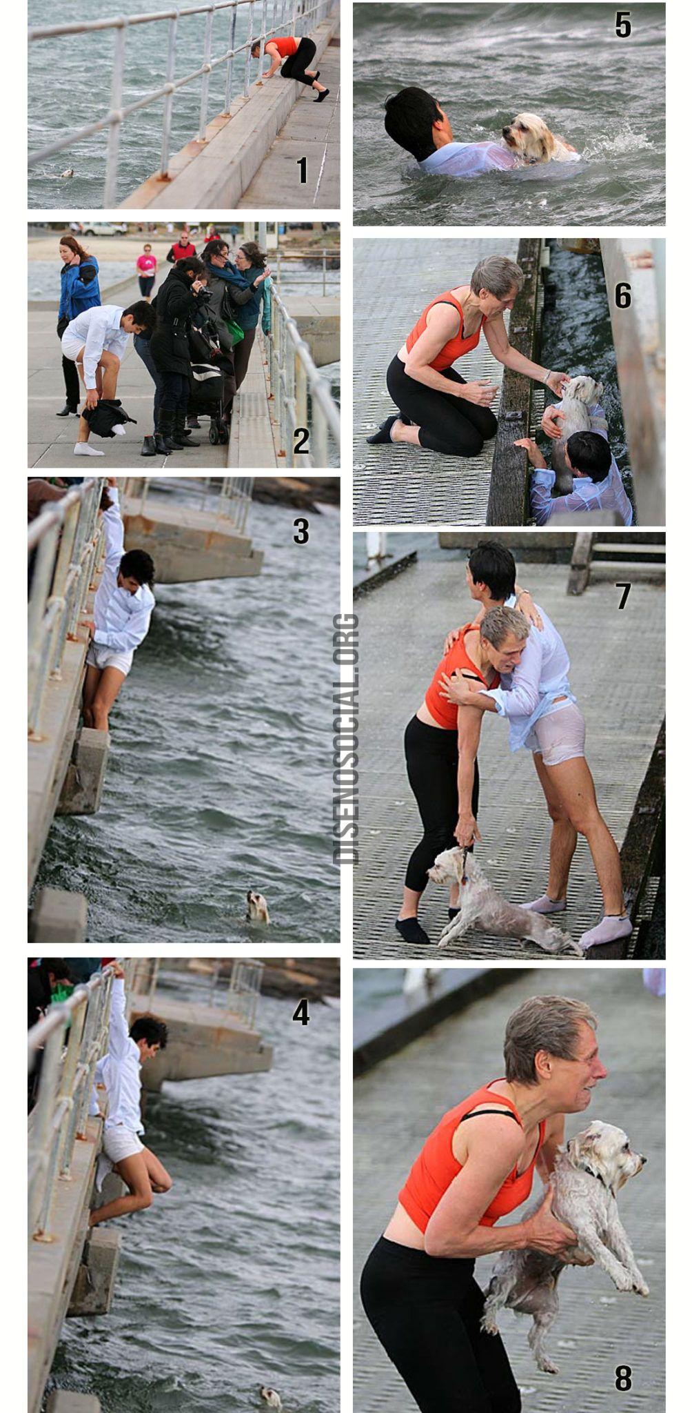 Estas imágenes de un desconocido que salta en aguas turbulentas para rescatar al pequeño Shih Tzu, en Melbourne